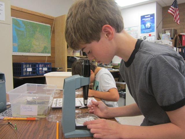 Sam Conrad looks through a microscope to identify an aquatic invertebrate. photo by: Gay Roselle