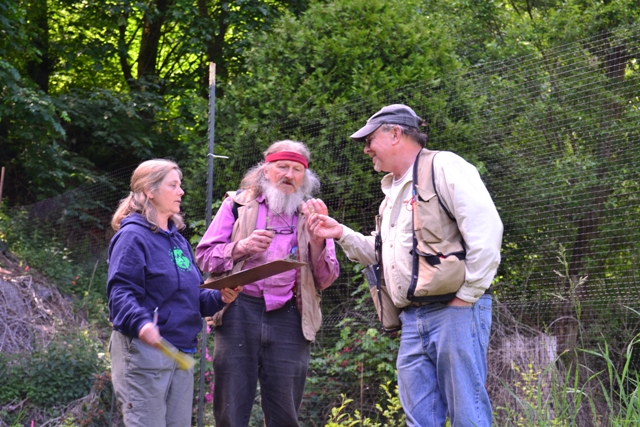 Part of the plant group discusses a species identification