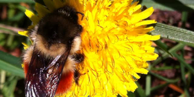 Vashon Nature Center - Busy Bee