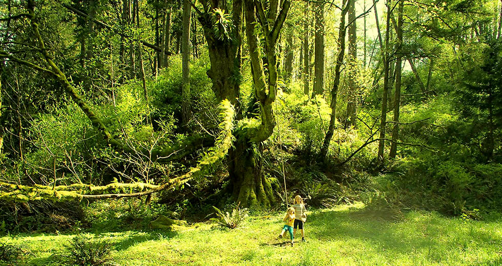 Vashon Nature Center - Vashon Tree Swing