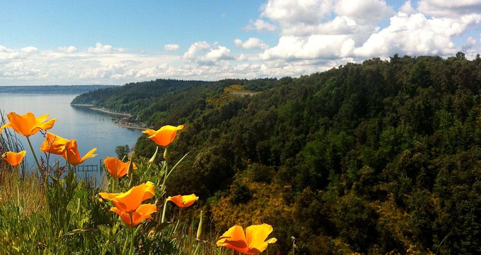 Vashon Nature Center - Glacer Poppies
