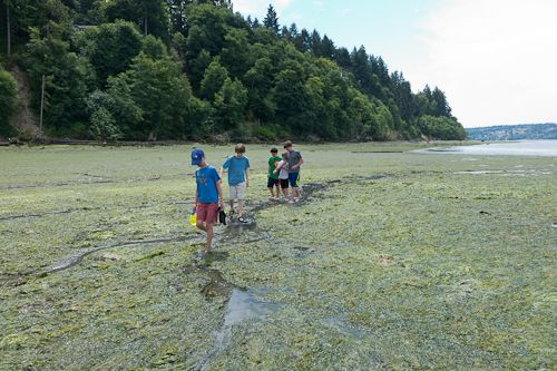 Low Tide at Lisabeula Park:
