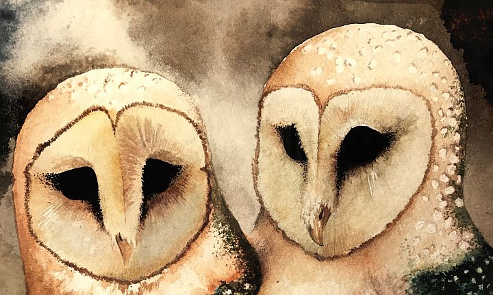 Barney and Blanche: a tale of barn owls nesting - Vashon ...